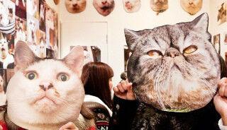 東京都神楽坂で開催中! 猫だらけの「ぶさかわ猫展」レポート
