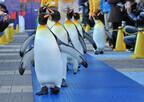 大阪府・海遊館で、ペンギンと一緒にパレードできるイベント開催