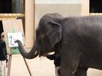 宮崎県・宮崎市フェニックス自然動物園でゾウによる書き初めを実施