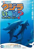 茨城県・大洗水族館で、野生のイルカに会いに行く企画展など開催