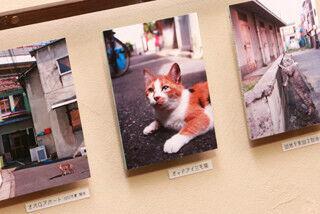 """大阪市中央区で猫の写真いっぱいの""""猫町六丁目写真展""""が開催中!"""
