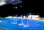 """福岡県・「マリンワールド海の中道」で、""""夜の水族館""""が開催"""