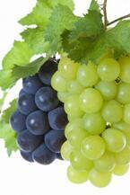 「Through[on] the grapevine(ブドウのつるを通して)」ってどんな意味?【知っているとちょっとカッコいい英語のコネタ】