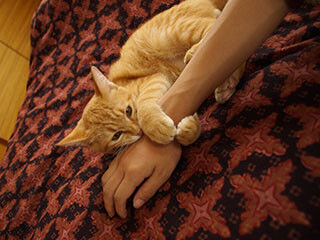 猫がお父さんよりもお母さんによくなつく理由