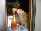 猫に指を差し出すと、鼻でチューをしてくれる理由