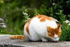 猫がカリカリを皿の外に出して食べる理由