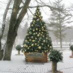 【エンタメCOBS】クリスマスツリーはどうしてモミの木? 意外と知らないXmasうんちく