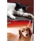 【エンタメCOBS】永遠のライバル!? 愛犬家VS愛猫家のウチの子アピール合戦