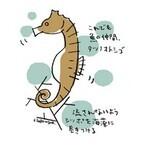 【コブスくんのモテ男道!】竜なの?何なの?不思議だらけのタツノオトシゴ