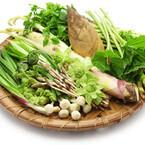 苦みのある春野菜がダイエットに良いってホント?