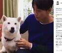竹内涼真、お父さん犬との動画が100万再生突破!「可愛すぎる」と話題