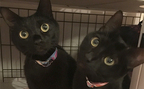 黒猫×タロット | かわいい猫の兄妹が「恋の行方」を占う【恋占ニュース】