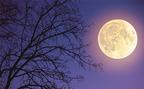 双子座は「何をすべきか」答えが出るとき!?3月12日 乙女座の満月【新月満月からのメッセージ】