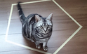 """猫×タロット第3弾!美猫""""小冬さん""""があなたの「恋の行方」を占うニャ【恋占ニュース】"""