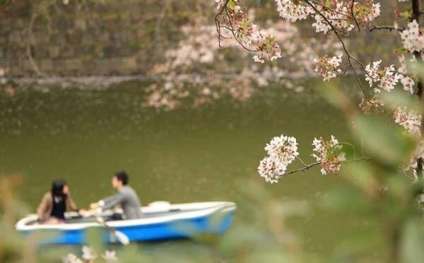 桜と一緒に恋が散る!? お花見デートの失敗エピソード!男性の理想のデートも