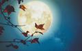 9月25日は牡羊座の満月…山羊座は目指したい方向へ進んでいこう【新月満月からのメッセージ】