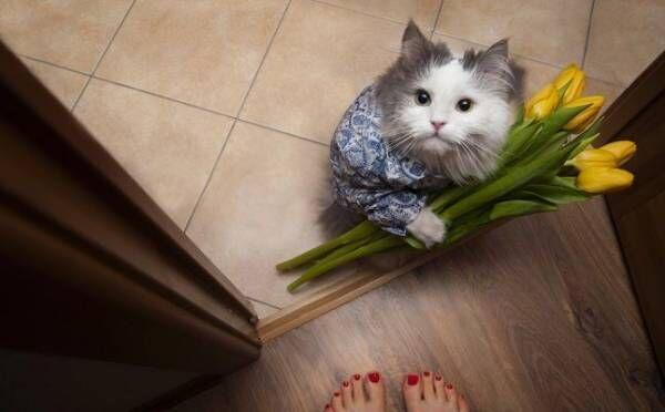 付き合うとキュンキュンが止まらない!「猫系男子」との恋愛エピソード