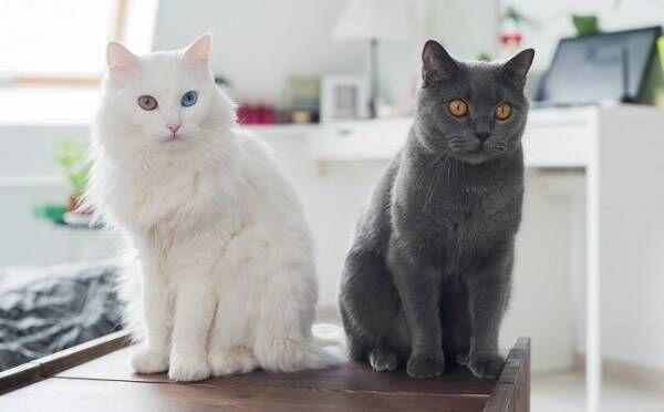 「白猫」はモテ期到来のサイン!「黒猫」は?猫にまつわる夢占い5つ