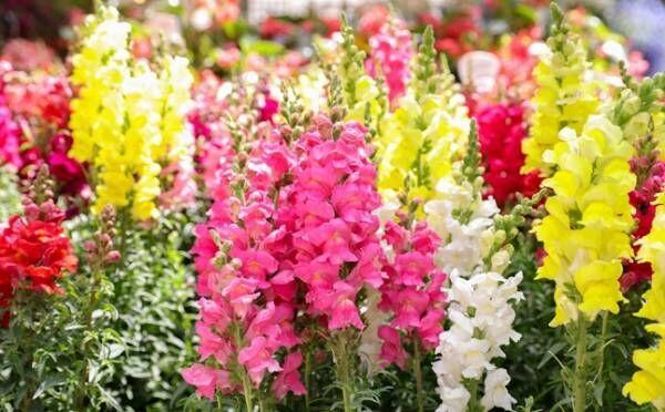 【3択占い】気になる彼と距離を縮めるには?選んだ花で恋を実らせる秘訣がわかる