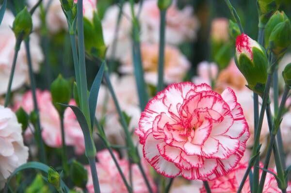 【4択占い】彼はあなたのここが好き!選んだ花でわかるあなたの魅力