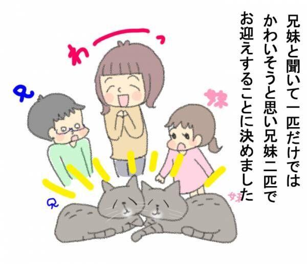 「その猫実は…」保護施設での猫との出会いに、私たちが決断したことの画像