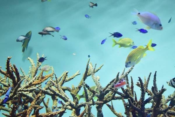 水族館デビューにおすすめ!手頃な入館料もうれしい「葛西臨海水族園」の画像