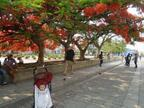 《初めての子連れ海外はメキシコ!》6ヶ月ベビーと、オアハカで街歩き♪