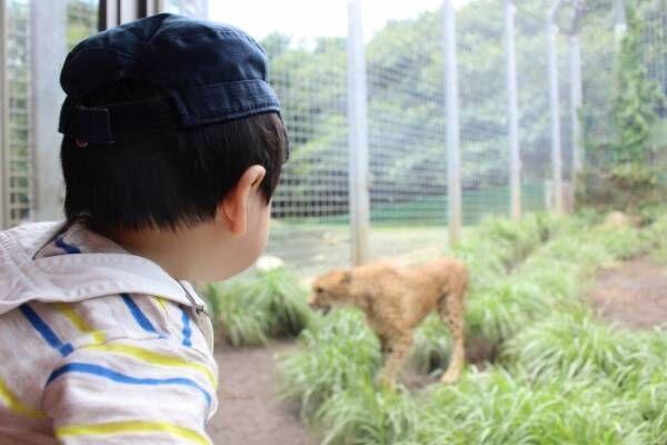 《ママたちの子連れ旅レポート》話題の観光スポット「伊豆アニマルキングダム」って、どんなところ?
