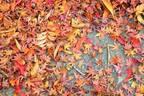 シーンで選ぶ秋色リップ〜デパコス編【偏愛コスメ#1】