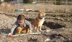 """畑仕事を頑張る男の子と""""我関せず""""な柴犬コンビの奮闘劇、飼い主さん「監督が新人作業員を見守るかのよう」"""
