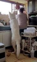 """この体格、着ぐるみでは…? デカすぎる""""5ヵ月の仔犬""""に反響、飼い主さん「大型犬の成長速度を見てほしい」"""