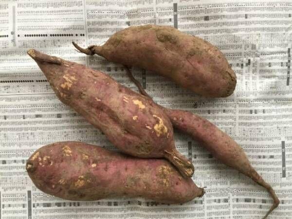 農家直伝!家でできる本当においしい焼き芋と味がよくなる保存法