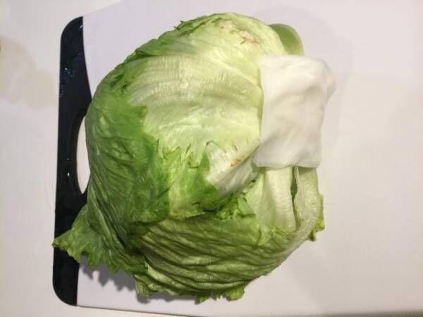 しおれた葉物野菜がシャキッと復活!鮮度が続く保存法も
