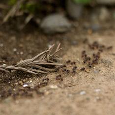アリは気温25℃以上で活発に!家宅侵入させないための小さな心得「食べカスをこぼさない」