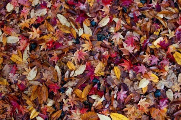 切ない季節の到来! 働く女子が選んだ秋のはじまりに聴きたい曲6選