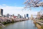 シャンドンロゼが桜に映える「お花見CHANDON」。中目黒・神楽坂に期間限定バー