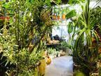恵比寿の真ん中にまるで植物園のようなフラワーショップ「ソーセリードレッシング」