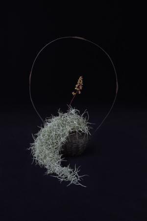 チランジア・ウスネオイデス / ヒューケラの花