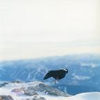 川内倫子が未公開作品から最新作まで約100点を披露する写真展「The rain of blessing」を開催