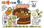 【発酵めがね:味噌】小倉ヒラクさんに訊く味噌にまつわるエトセトラ!そもそも、味噌ってどんな調味料?