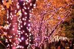 """今年の目黒川イルミネーションは桜色!点灯区間延長と約42万個のLEDで""""冬の桜""""を演出"""