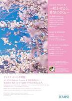 東北への思いを込めてルミネに希望の桜咲く。プラントハンター西畠清順プロデュース