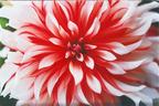 蜷川実花展、ミッドタウンで開催。未発表作品も公開