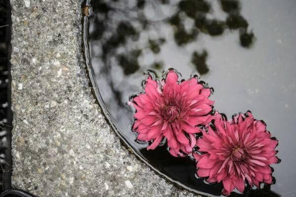 SIMPLICITY代表の緒方慎一郎とプラントアーティスト川本諭による共著『拈華(ねんげ)』