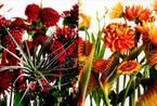 東信×椎木俊介『Time of Life 植物図鑑』、銀座蔦屋書店にて300部限定フェア開催中