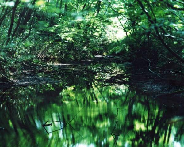 写真家・鈴木理策の展覧会「Water Mirror」、東京・渋谷のCASE TOKYOにて開催