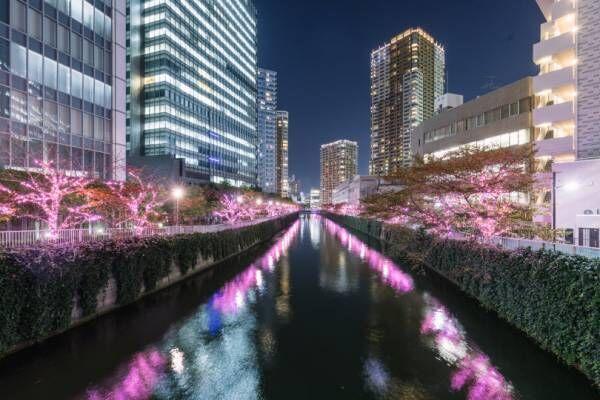"""目黒川のイルミネーション、今年も40万個のLEDで""""冬の桜""""が満開に! 11月9日から開催"""