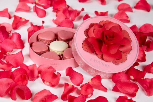 """ラデュレの2019年バレンタインはハート形マカロン。""""恋占い""""をモチーフにバラの花を散りばめた限定ボックス"""