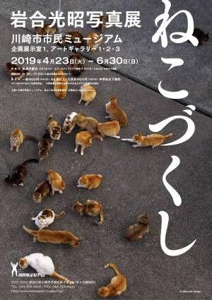 岩合光昭のねこ写真展が川崎市市民ミュージアムで開催! 島の猫シリーズなど約200点が一堂に