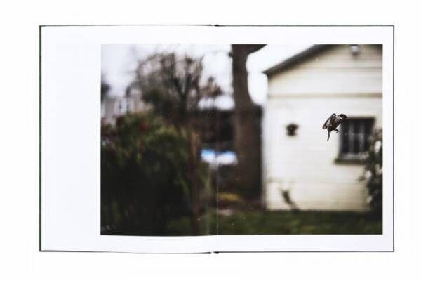 夢? 現実? 写真家テリ・ワイフェンバックが捉える鳥の住む世界【ShelfオススメBOOK】